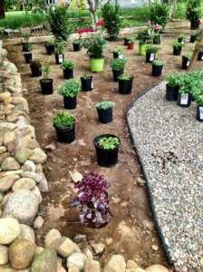 Flamouth Village Blooming garden transformation underway