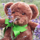 The lavenderbelly bear from cape cod lavender farms is a guest favorite
