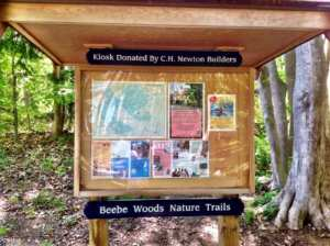 5 great hiking trails in upper cape beebe woods
