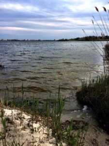 5 great hiking trails in upper cape cod salt pond