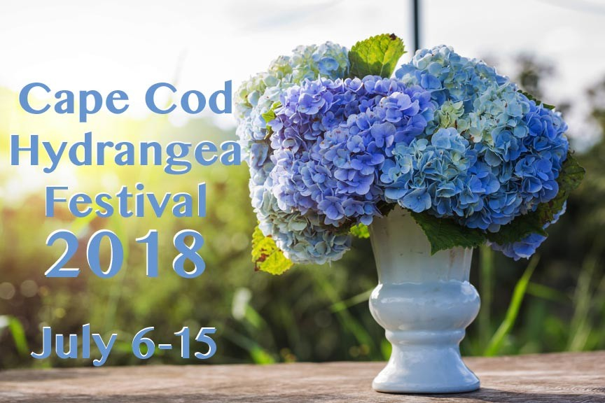 Cape Cod Hydrangea Festival 2018