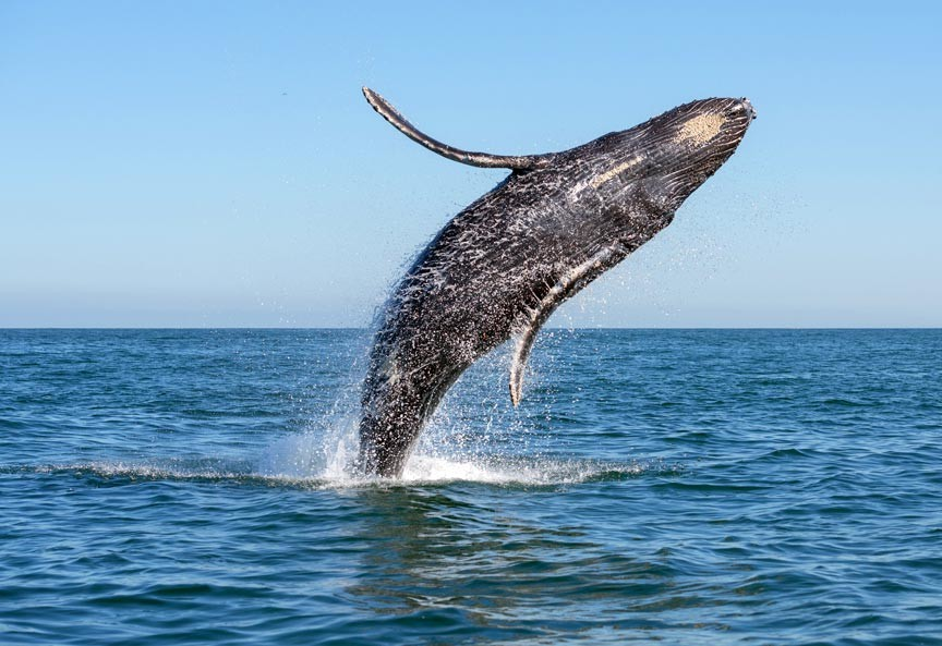 Enjoy a Cape Cod Whale Watching Tour!